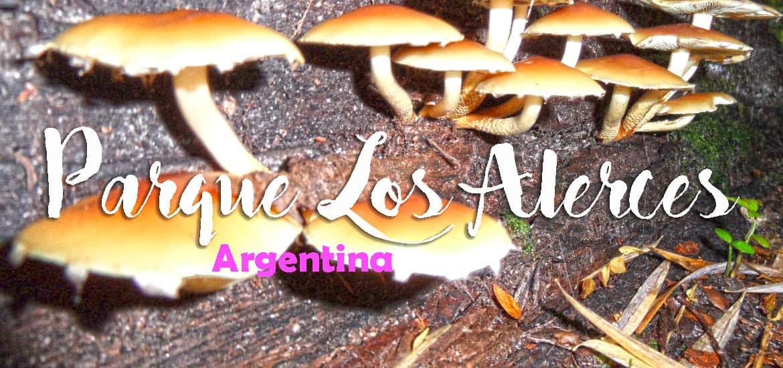 Visitar o PARQUE NACIONAL LOS ALERCES e descobrir um segredo argentino | Argentina