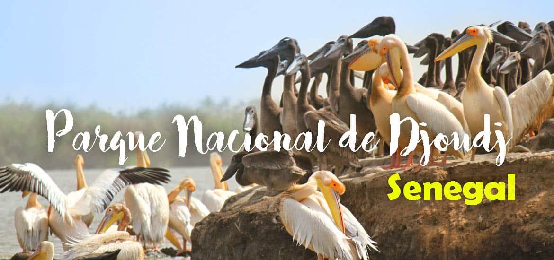 Visitar o PARQUE NACIONAL DE DJOUDJ e ver o maior santuário de avifauna de África Ocidental | Senegal
