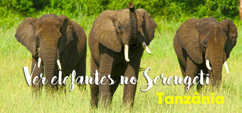 VER ELEFANTES NO SERENGETI - Os gigantes africanos no Serengeti | Tanzânia