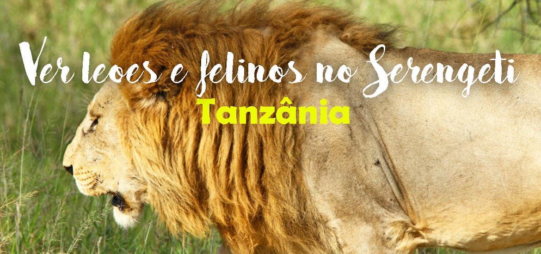VER LEÕES NO SERENGETI - Encontros imediatos de 3º grau com os leões do Serengeti | Tanzânia