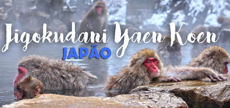 Visitar JIGOKUDANI YAEN KOEN e ver os macacos na neve | Japão