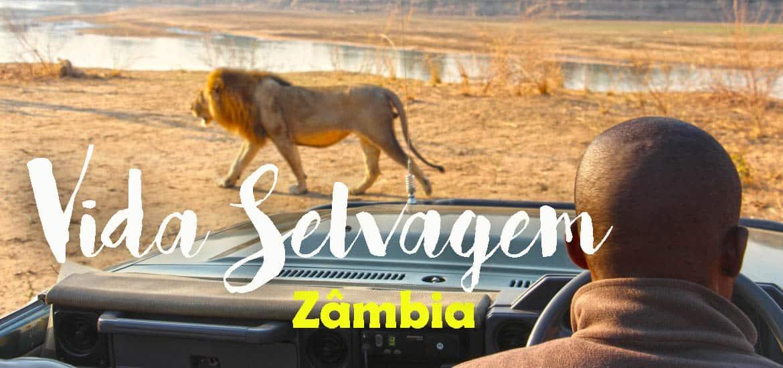 O MELHOR SAFARI DE ÁFRICA | Explorar a Zâmbia e sua vida selvagem