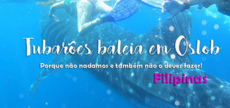 TUBARÕES BALEIA EM OSLOB - FILIPINAS   Porque NÃO nadamos!